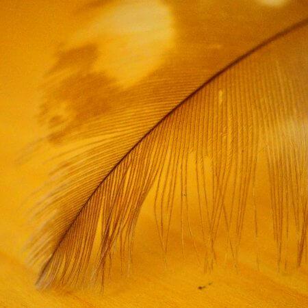 Feather by Kerstin Hentschel