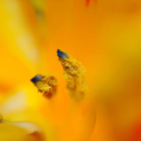 Tulpen by Kerstin Hentschel